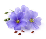 graine et fleur