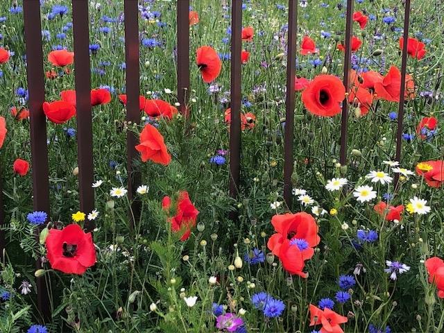Des fleurs pour briser les barreaux (Photo MHz©)